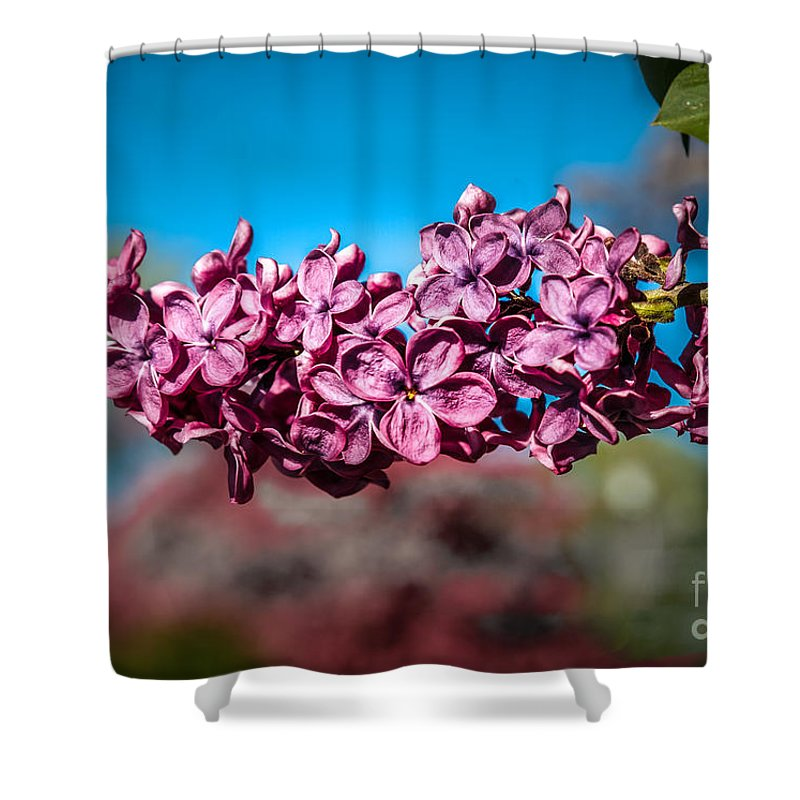 Lilac Shower Curtain featuring the photograph Purple Lilac by Robert Bales