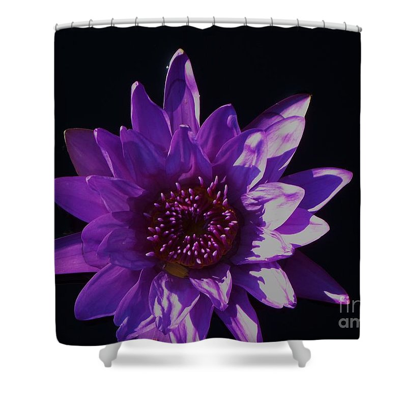 Photograph Shower Curtain featuring the photograph Purple Lily Monet by Eric Schiabor