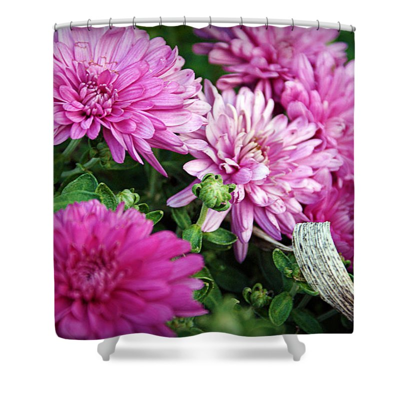 Flowers Shower Curtain featuring the photograph Purple Mums by Cricket Hackmann