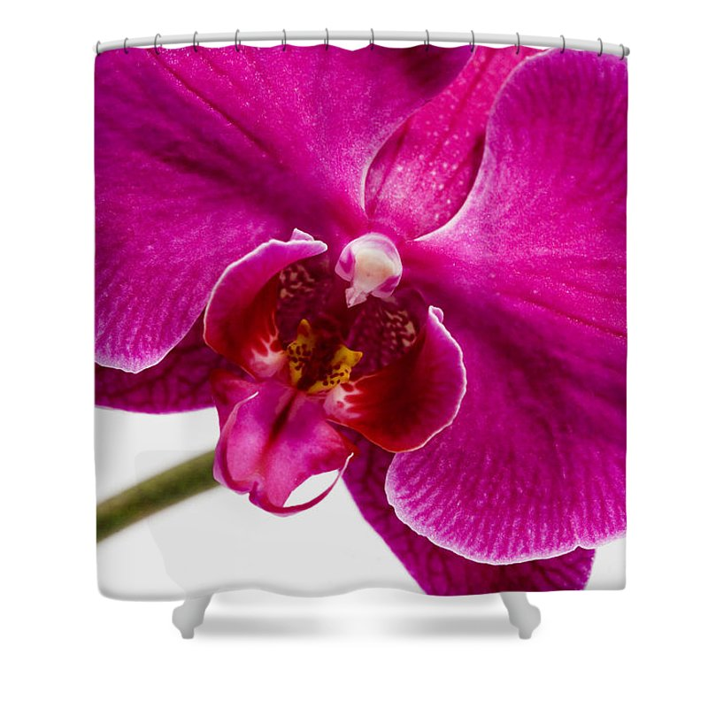 Flower Shower Curtain featuring the photograph Purple Orchid by Karen Ulvestad