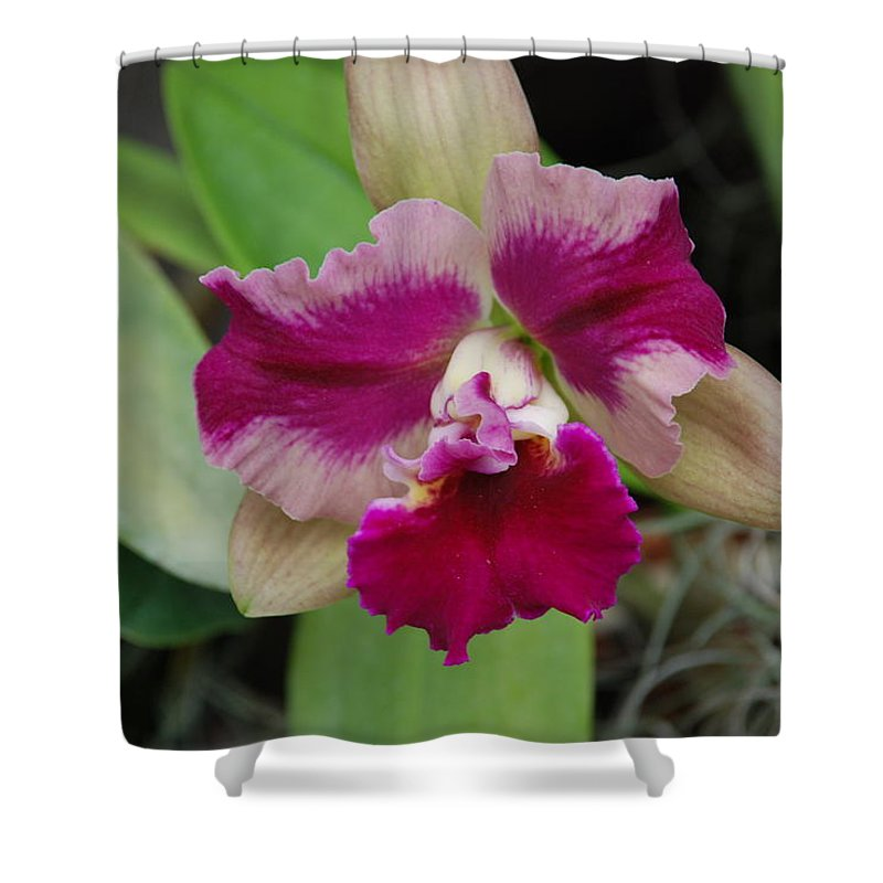 Macro Shower Curtain featuring the photograph Purple Orchid by Rob Hans