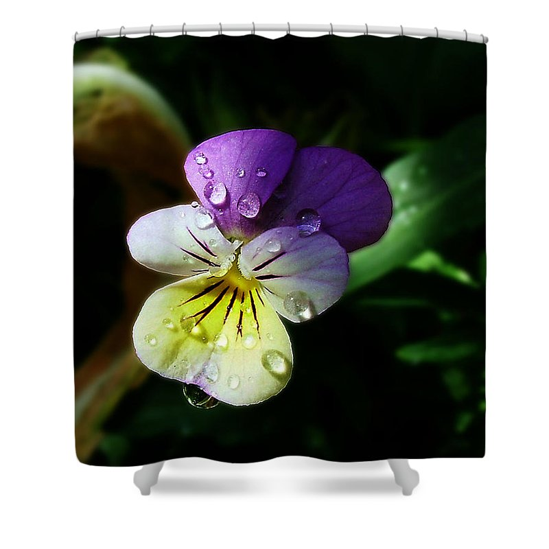 Flower Shower Curtain featuring the photograph Purple Pansy by Anthony Jones