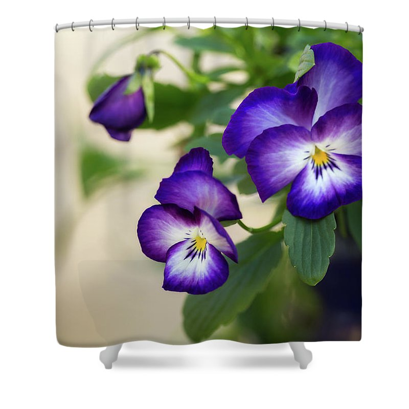 Dallas Shower Curtain featuring the photograph Purple Passion by Ann Skelton