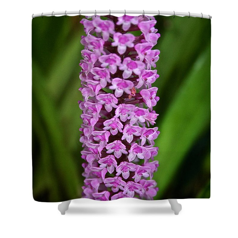 Tropical Plant Shower Curtain featuring the photograph Purple Pillar by Susan Herber