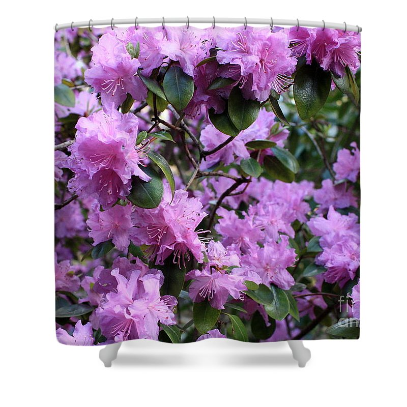 Spring Shower Curtain featuring the photograph Purple Rhododendrons by Carol Groenen