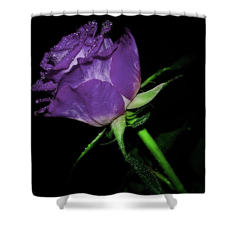 Rose Shower Curtain featuring the photograph Purple Rose by Lee Pirie