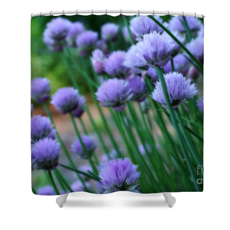 Flower Shower Curtain featuring the photograph Purple Scallions by Smilin Eyes Treasures