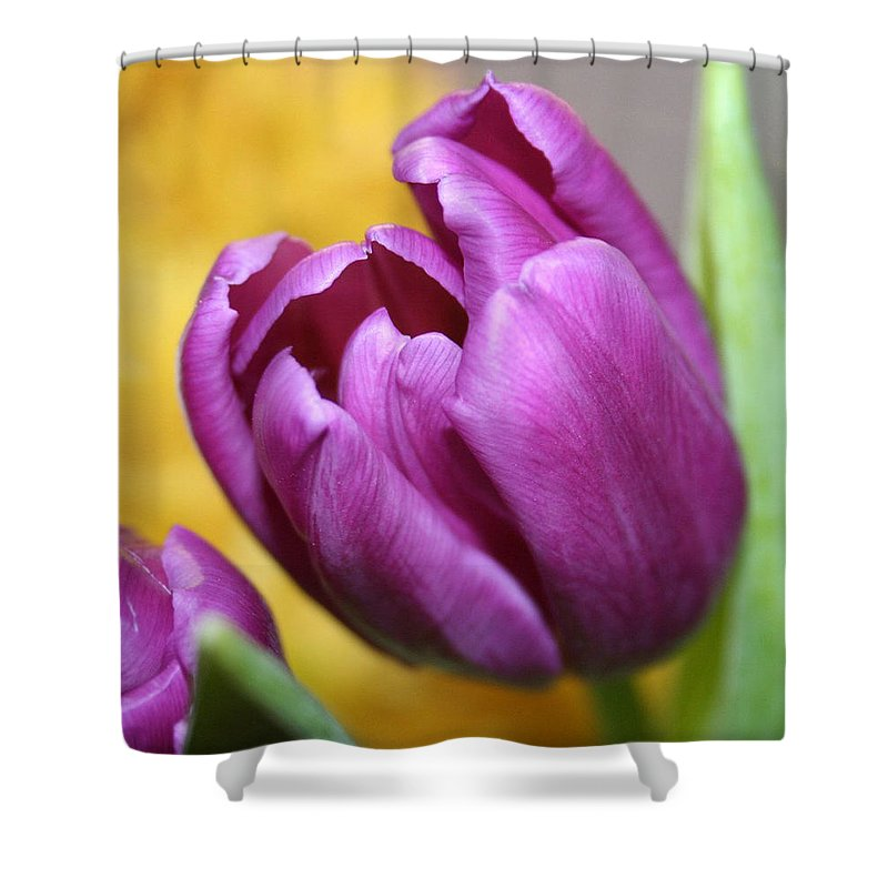 Flowers Nature Shower Curtain featuring the photograph Purple Spring by Linda Sannuti
