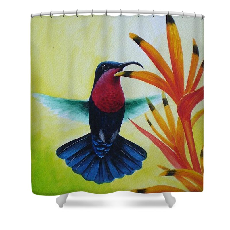 Purple-throated Carib Shower Curtain featuring the painting Purple-throated Carib And Bird Of Paradise by Christopher Cox