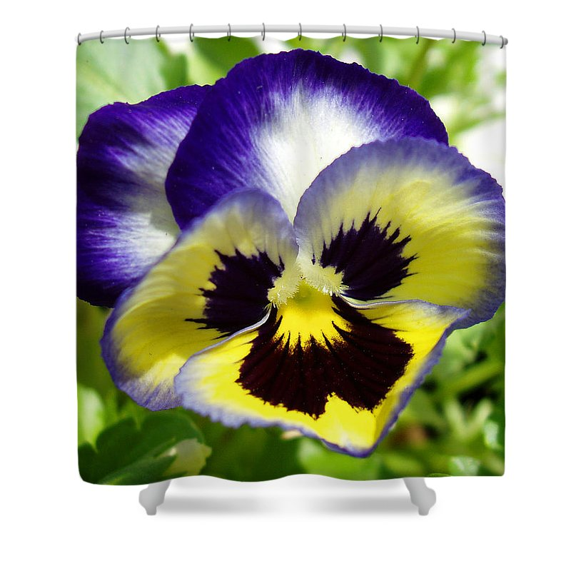 Pansy Shower Curtain featuring the photograph Purple White And Yellow Pansy by Nancy Mueller