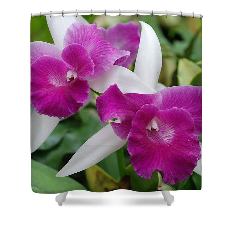 Macro Shower Curtain featuring the photograph Purple White Orchids by Rob Hans