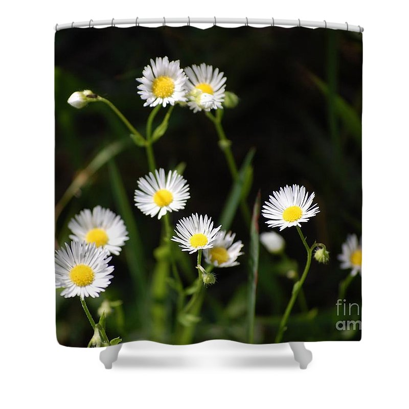 Digital Photo Shower Curtain featuring the photograph Pushing Up..... by David Lane