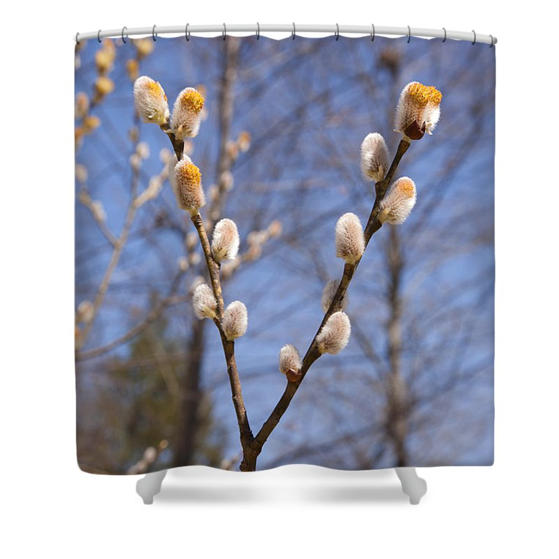 Pussy Willow Shower Curtain featuring the photograph Pussy Willow by Erin Paul Donovan