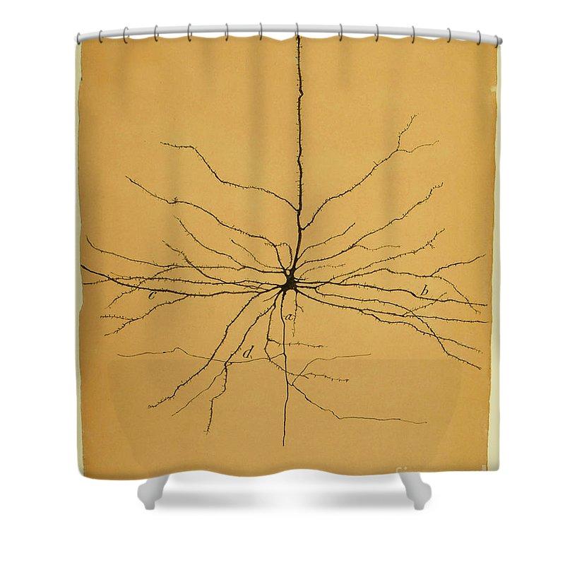 Neuron Shower Curtains
