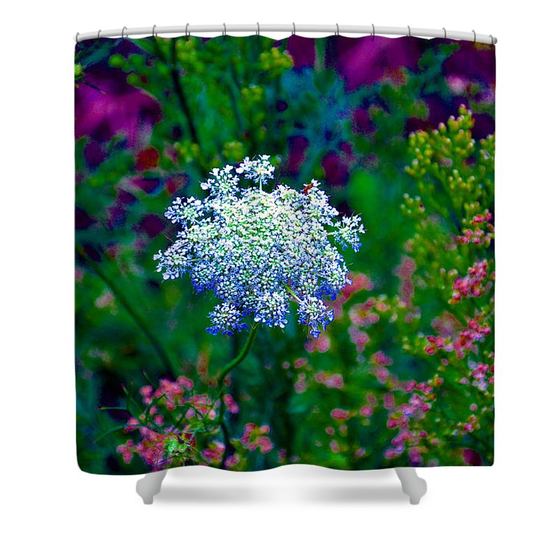 Queen Annes Lace Shower Curtain featuring the photograph Queen Anne by Brittany Horton