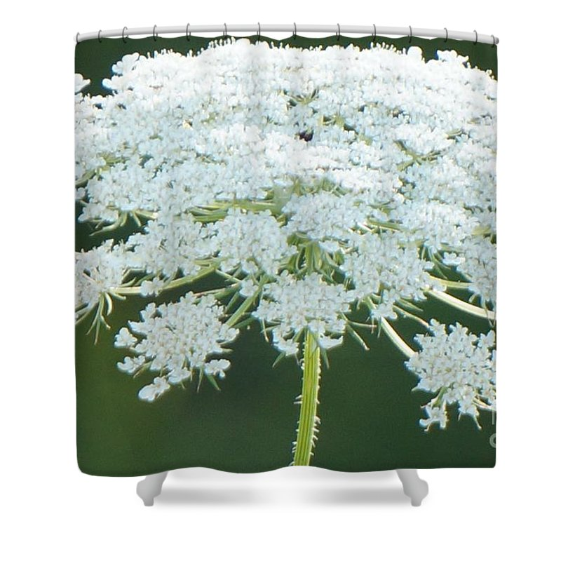 Queen Anne's Lace Shower Curtain featuring the photograph Queen Anne's Lace by Maxine Billings