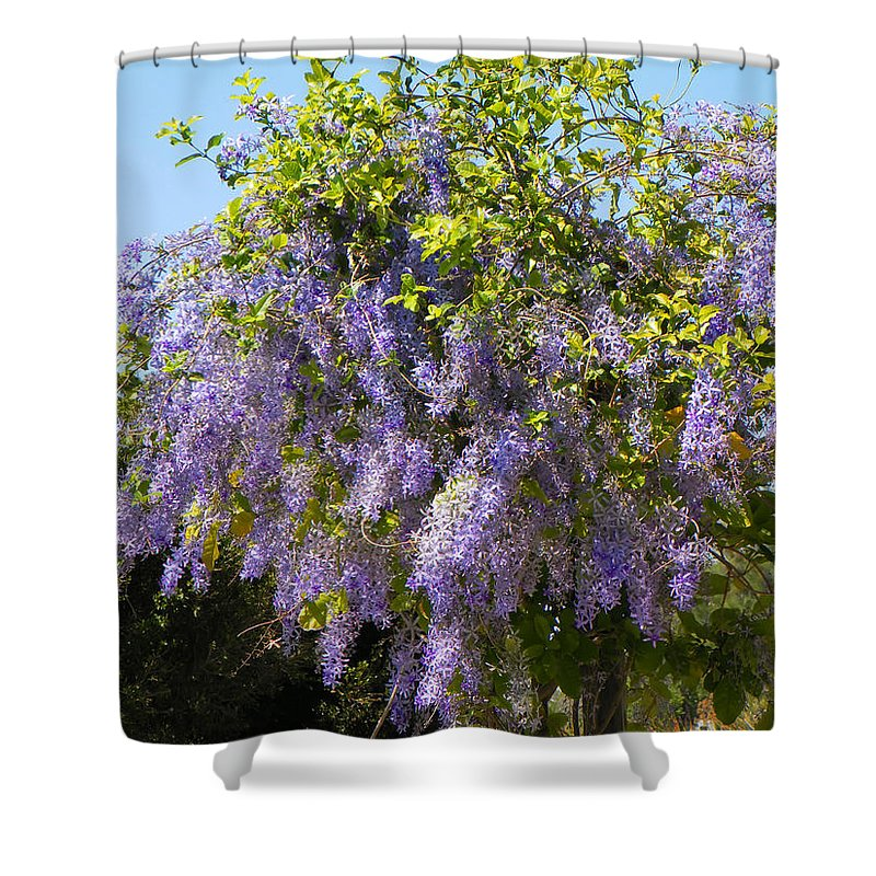 Flowers Shower Curtain featuring the photograph Queen's Wreath Vine by Rosalie Scanlon
