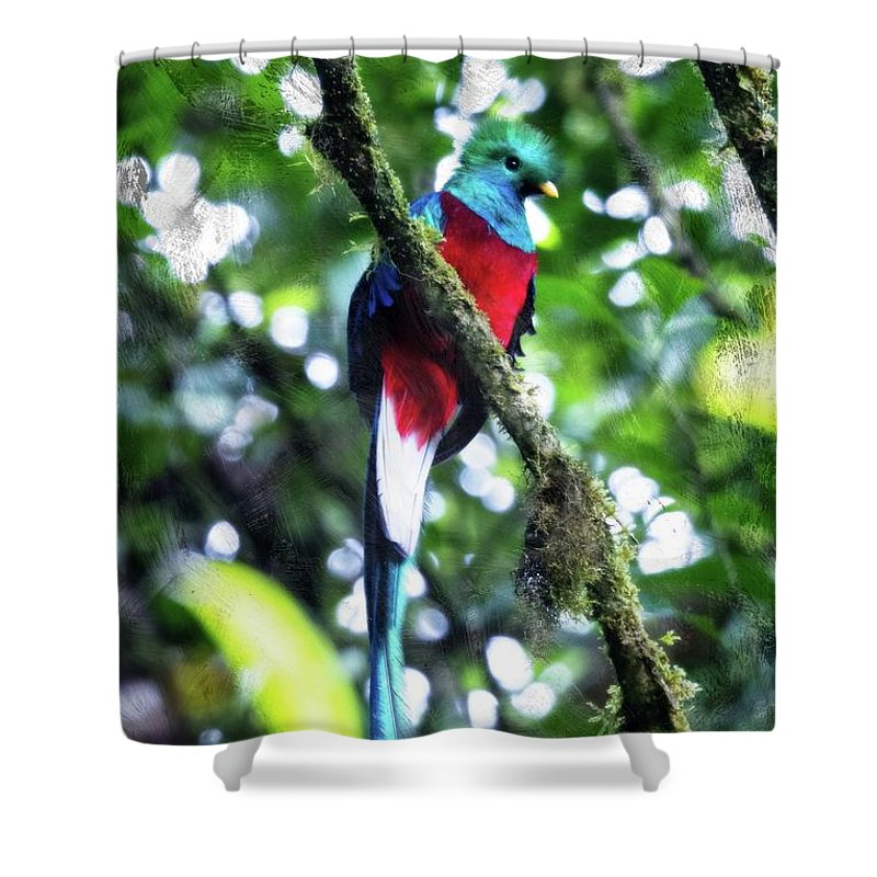 Monteverde Shower Curtain featuring the photograph Quetzal In Monteverde by Charles Wollertz