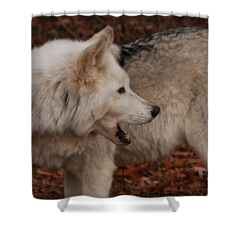 Wolf Shower Curtain featuring the photograph Quiet Back There by Lori Tambakis