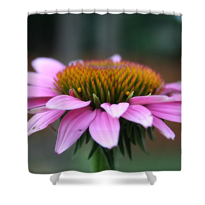 Floral Art Shower Curtain featuring the photograph Quiet Moments by Linda Sannuti