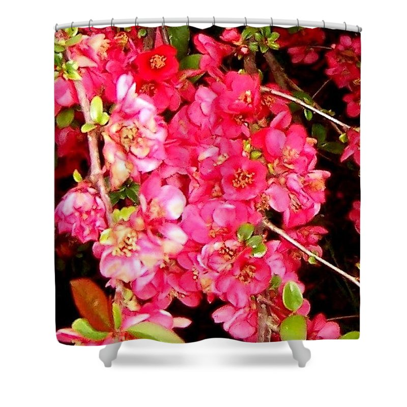 Quince Shower Curtain featuring the photograph Quince by Linda Chambers