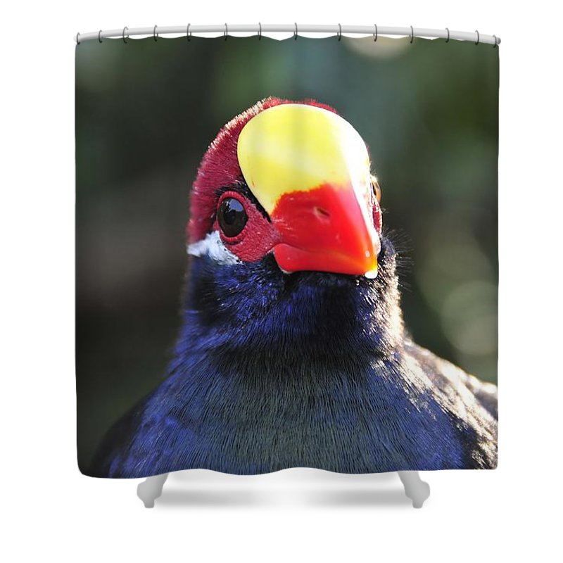 Quizzical Shower Curtain featuring the photograph Quizzical Bird by David Lee Thompson
