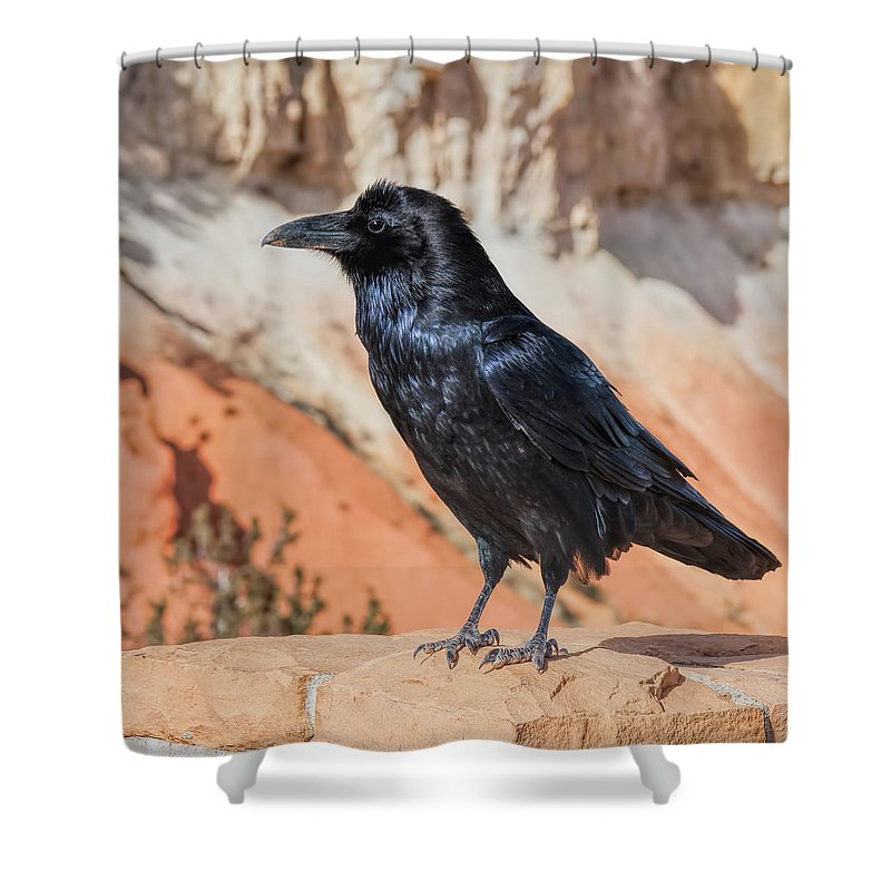 Birds Shower Curtain featuring the photograph Quoth The Raven by John M Bailey