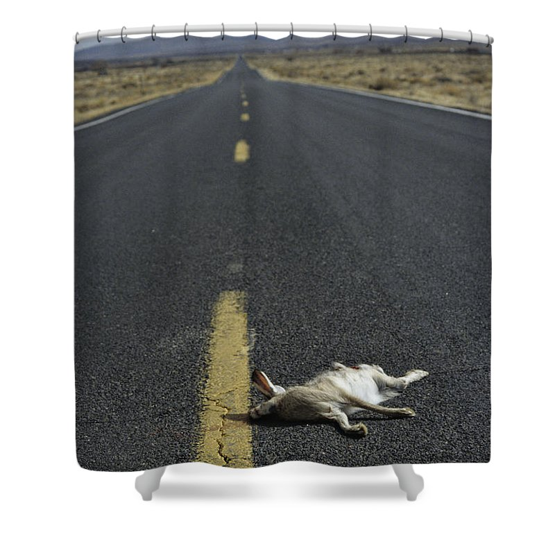 Animal Shower Curtain featuring the photograph Rabbit Road Kill by Dawn Kish
