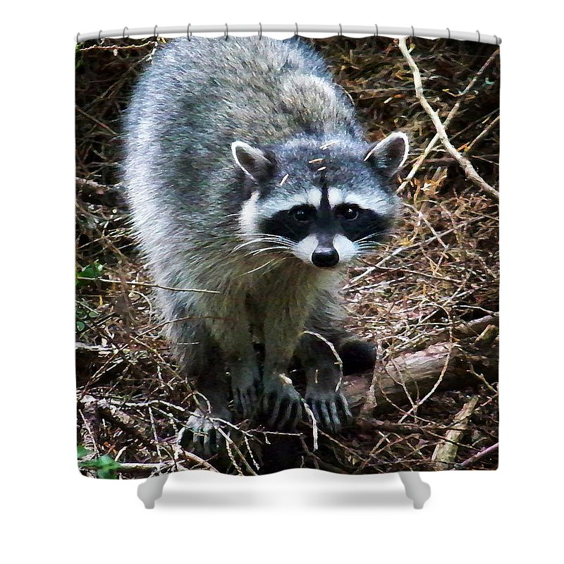 Painting Shower Curtain featuring the photograph Raccoon by Anthony Jones