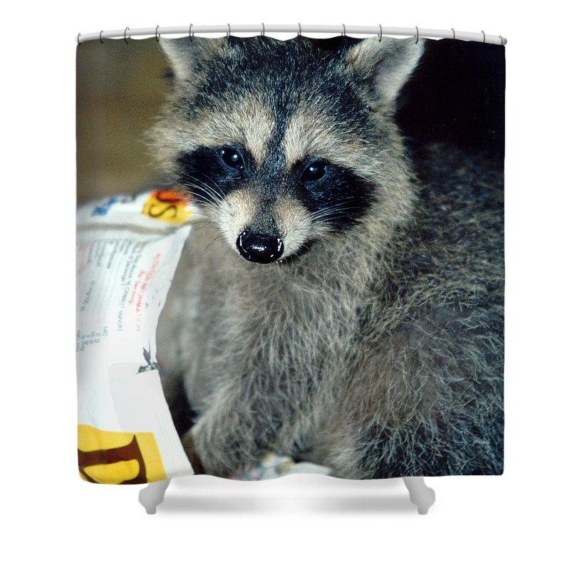 Faunagraphs Shower Curtain featuring the photograph Raccoon1 Snack Bandit by Torie Tiffany