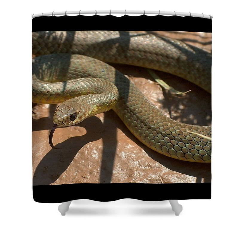 Green Racer Shower Curtain featuring the photograph Racer On The Rio Grande by Tim McCarthy