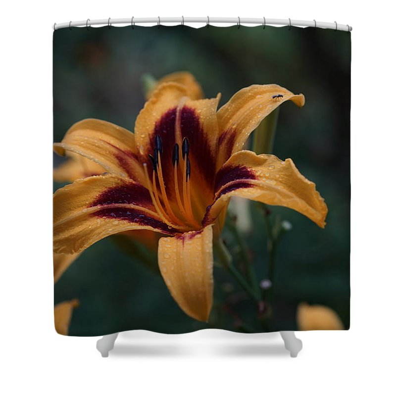 Lily Shower Curtain featuring the photograph Radiant Lily by Carrie Goeringer