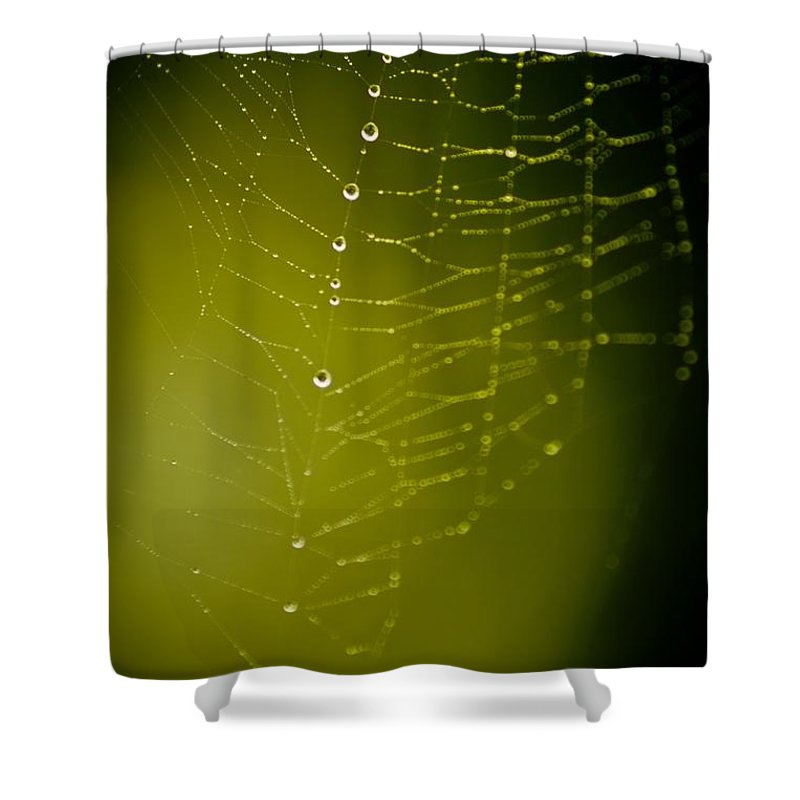Spider Shower Curtain featuring the photograph Rain Down On Me by Danielle Silveira
