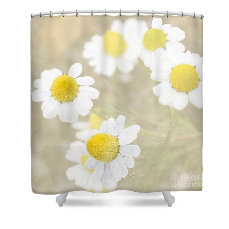 Chamomile Shower Curtain featuring the photograph Rain-kissed Chamomile by Cindy Garber Iverson