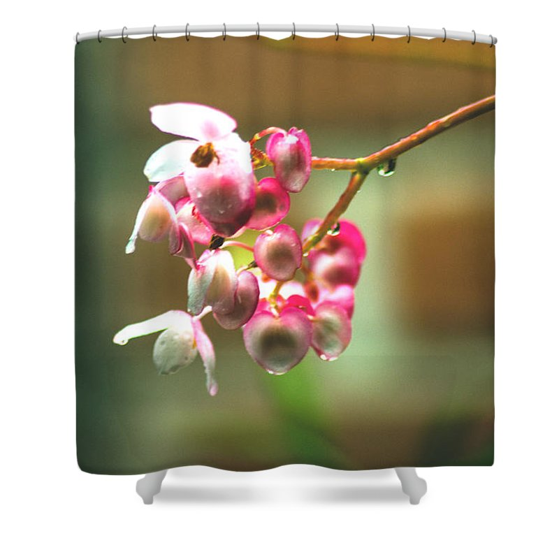 Plant Shower Curtain featuring the photograph Rain On Flowers by Totto Ponce