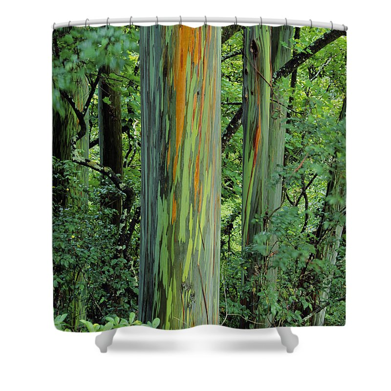 Beautiful Shower Curtain featuring the photograph Rainbow Eucalyptus by Ron Dahlquist - Printscapes