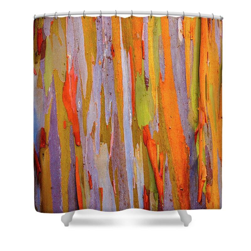Eucalyptus Shower Curtain featuring the photograph Rainbow Eucalytpus by Cory Huchkowski