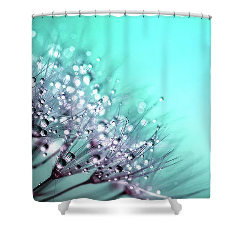 Dandelion Shower Curtain Featuring The Photograph Raindrops