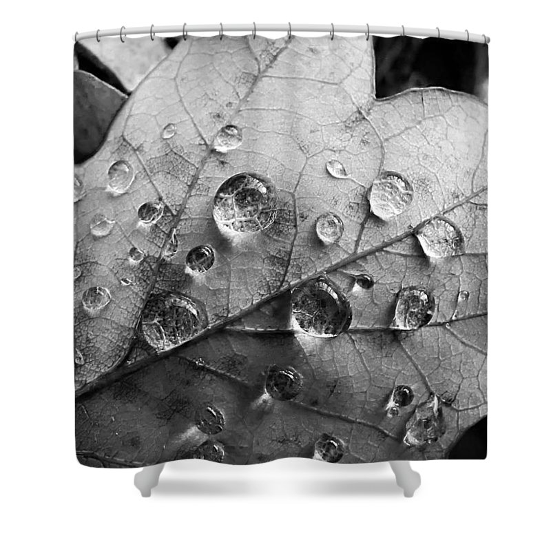 Drops Shower Curtain featuring the photograph Raindrops by Daniel Csoka