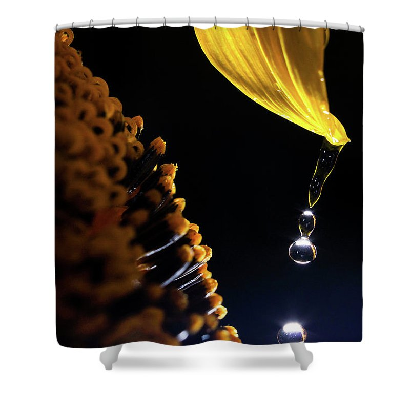 Rain Shower Curtain featuring the photograph Raindrops From Sunflower Petal by Cris Ritchie