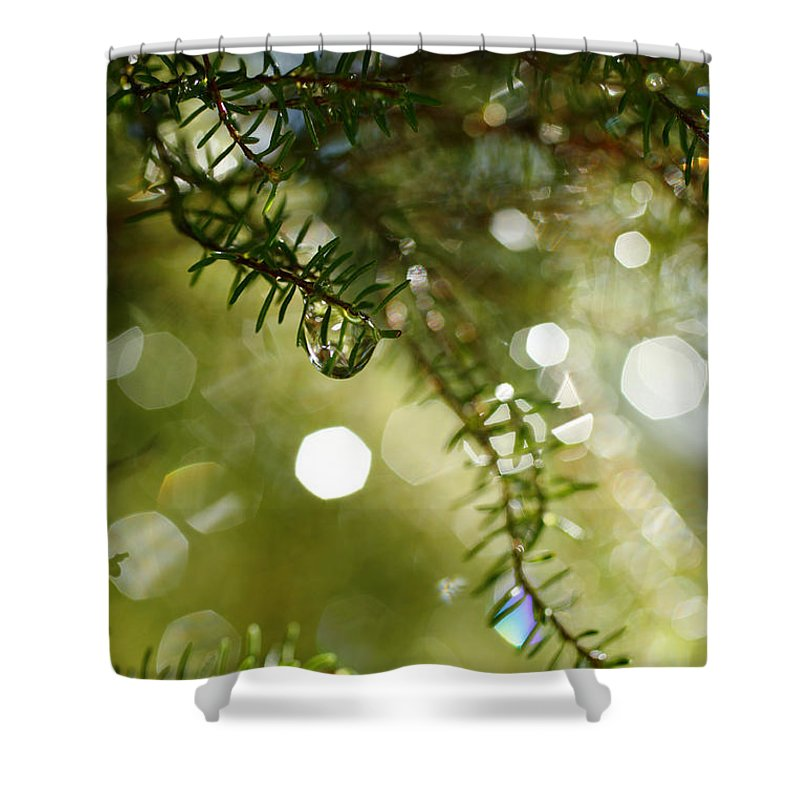 Dew Shower Curtain featuring the photograph Raindrops by Gaspar Avila