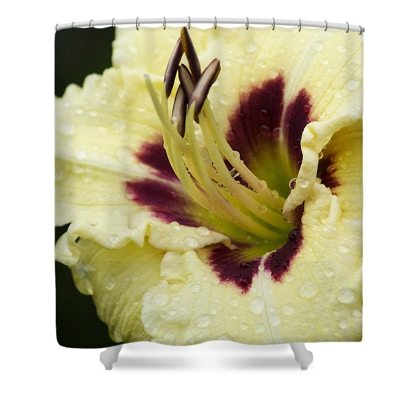 Flower Shower Curtain featuring the photograph Raindrops On A Petal by Tiffany Erdman