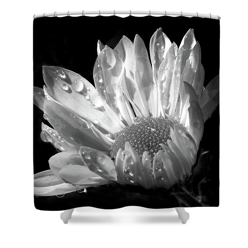 Daisy Shower Curtain featuring the photograph Raindrops On Daisy Black And White by Jennie Marie Schell