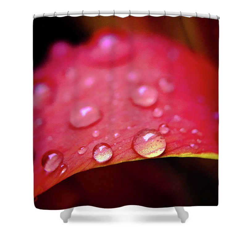 Macro Shower Curtain featuring the photograph Raindrops by Robert Yaeger