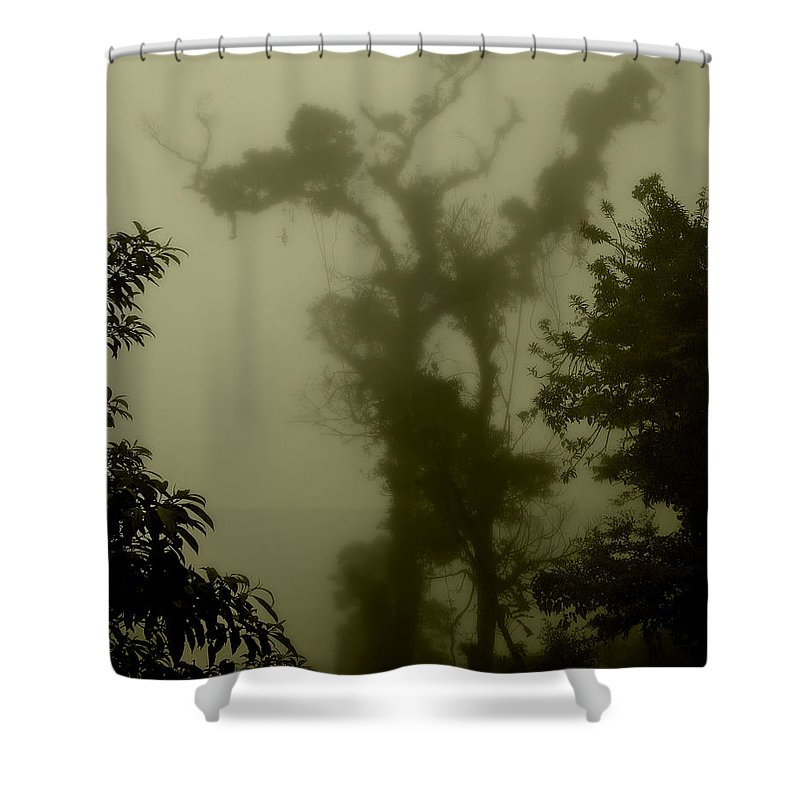 Tree Shower Curtain featuring the photograph Rainforest IIi by Perry Webster