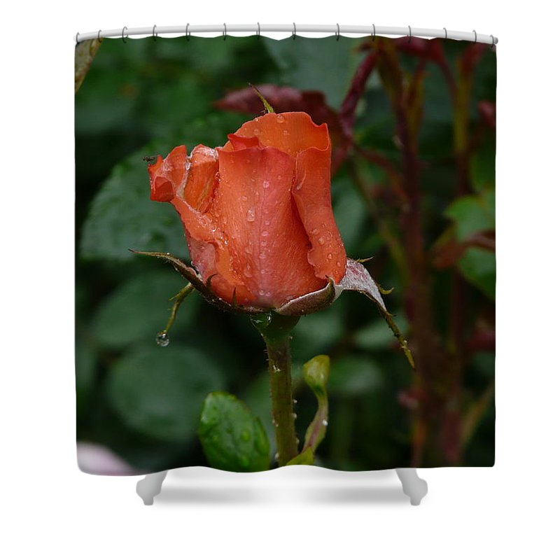 Flower Shower Curtain featuring the photograph Rainy Rose Bud by Valerie Ornstein