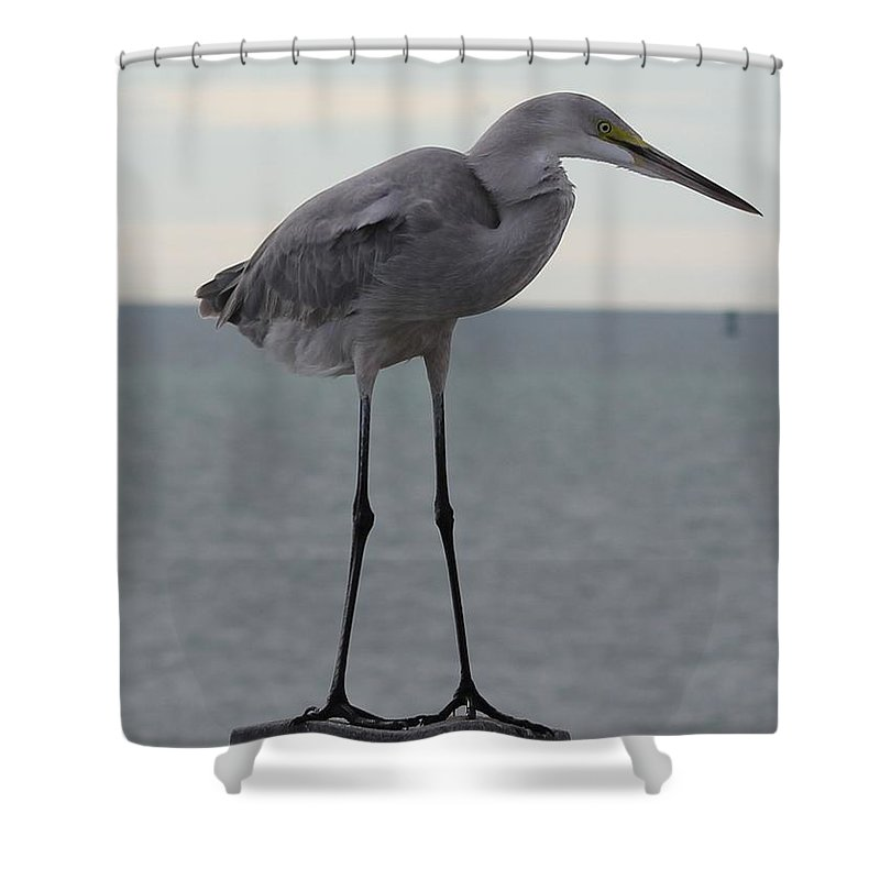 Hybrid Shower Curtain featuring the photograph Rare Breed by Charles Van Wagenen Jr