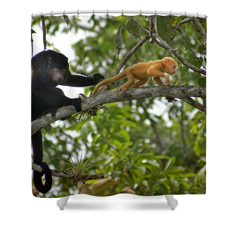Monkey Shower Curtain featuring the photograph Rare Golden Monkey by Heather Coen