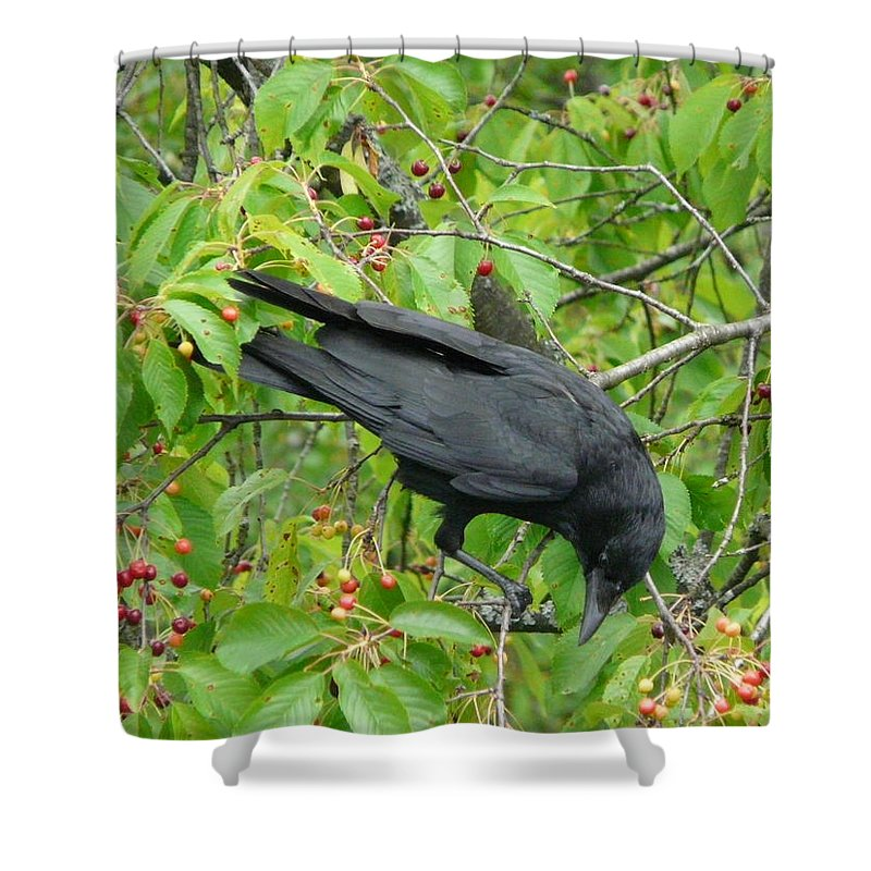 Bird Shower Curtain featuring the photograph Raven In The Cherry Tree by Valerie Ornstein