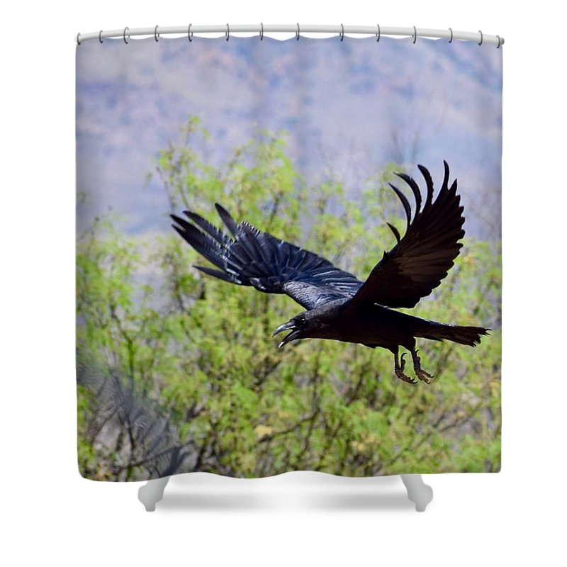 Resident Raven Shower Curtain featuring the photograph Raven by Tammy Windsor-Brown